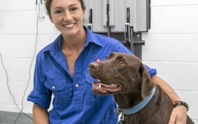 Vet clinic puts paws first in move to Oakey CBD