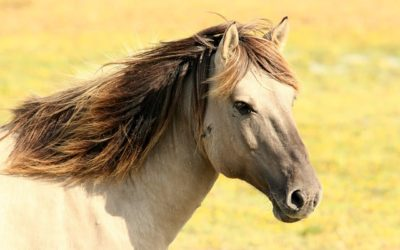 Management of equine wounds Part 1 – what horse owners need to know